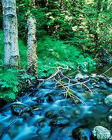 Little Sur River and Redwoods, Big Sur, California.