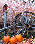 Bureau County, IL  <br /> Fall scene with pumpkins, birdhouse, weathered fence and wagon wheel with pampas grass in the background