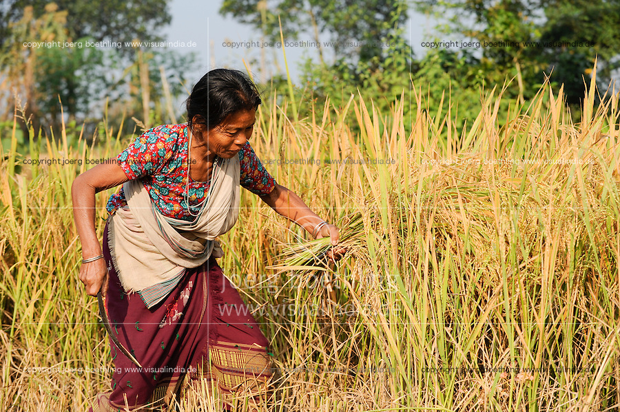 Bangladesh, Region Madhupur, Garo Frau Moishoni Nokrek bringt die Reisernte ein , Garos sind eine christliche u. ethnische Minderheit / BANGLADESD Madhupur, Garo woman carry rice crops after harvest, Garos is a ethnic and christian religious minority