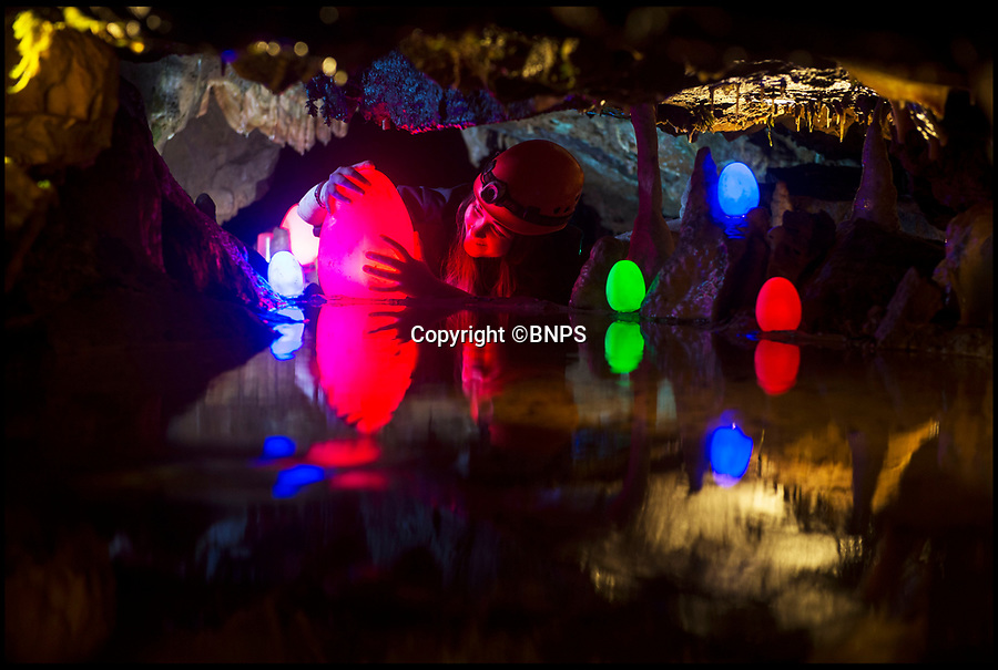 """BNPS.co.uk (01202 558833)<br /> Pic: PhilYeomans/BNPS<br /> <br /> Glow with the flow - Cheddar caves in Somerset gets its own luminous easter egg show this year.<br /> <br /> Multi-coloured eggs are being concealed at different subterranean landmarks in the spectacular cave system this Easter.<br /> <br /> """"We wanted to provide our own unique egg hunt for visitors to the caves over the Easter holidays,"""" said Operations Manager Leon Troake.<br /><br />""""It took us an entire day to get all 50 of the eggs distributed throughout the caves but the end result is really impressive; particularly when you switch off all the lights!"""" he added.<br /><br />Gough's Cave is 115 metres deep and contains several impressive rock formations; it's also the location for the Cheddar Yeo, the largest underground river system in Britain."""