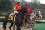 January 18, 2016: #4 Toews On Ice during the post parade before the running of the Smarty Jones Stakes at Oaklawn Park in Hot Springs, AR. Justin Manning/ESW/CSM