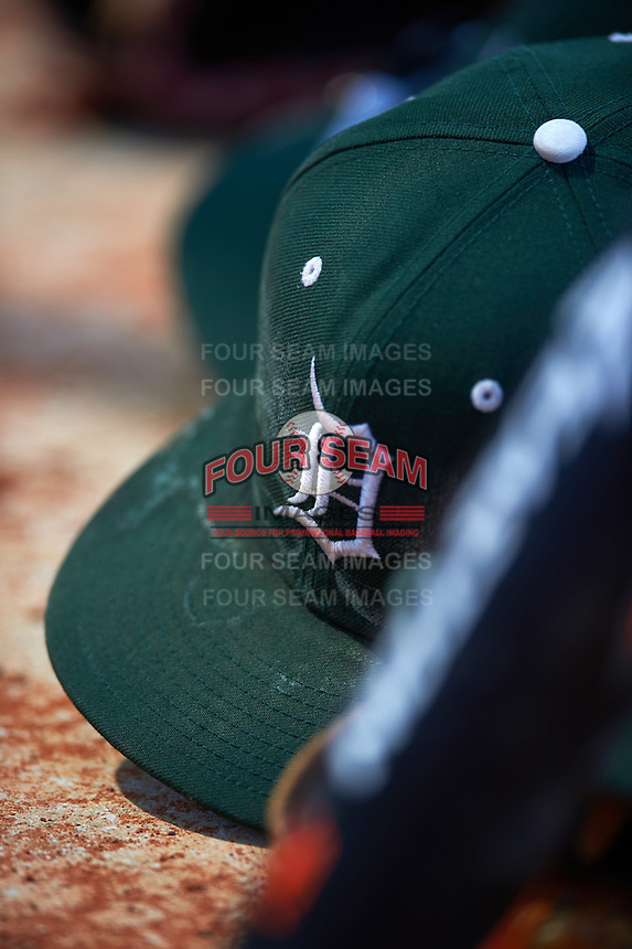 Dartmouth Big Green hat sites in the dugout during a game against the Eastern Michigan Eagles on February 25, 2017 at North Charlotte Regional Park in Port Charlotte, Florida.  Dartmouth defeated Eastern Michigan 8-4.  (Mike Janes/Four Seam Images)