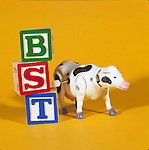 toy cow next to toy blocks illustrating genetically engineered hormone BST
