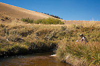 A woman casts a grasshopper pattern on a tributary of the Beaverhead River near Dillon.