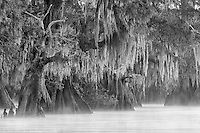 Looking back towards the rising sun, huge cypress trees with overhanging Spanish moss dominate the landscape.