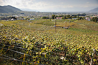 Katsunuma vineyards, Yamanashi Prefecture, Japan, October 12, 2009.