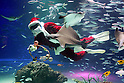 Swimming Santa Claus feeds fish at Sunshine Aquarium in Tokyo