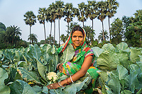 Vegetable farmer Sawan Kumari, a member of a Farmer's Producer Group, tends to her cauliflower plants in her farm in Machahi village, Muzaffarpur, Bihar, India on October 26th, 2016. Non-profit organisation Technoserve works with women vegetable farmers in Muzaffarpur, providing technical support in forward linkage, streamlining their business models and linking them directly to an international market through Electronic Trading Platforms. Photograph by Suzanne Lee for Technoserve