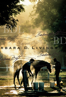 Dawn at the Lukas barn, Saratoga.  1986. Saratoga Race Course, Saratoga Racetrack, beautiful horse racing, Thoroughbred racing, horse, equine, racehorse, morning mood