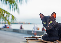 A cat along Manila Bay, Philippines