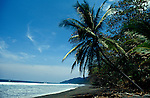 Palm Tree and Beach, Corcovado NP, Osa Peninsula, Costa Rica.Costa Rica....