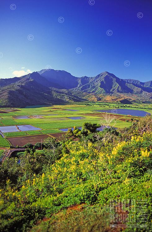 Taro fields Hanalei, Kauai