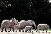 Family of elephants outlined by the sunlight walking across dusty earth in the Amboseli, Kenya, Africa (photo by Wildlife Photographer Matt Considine)