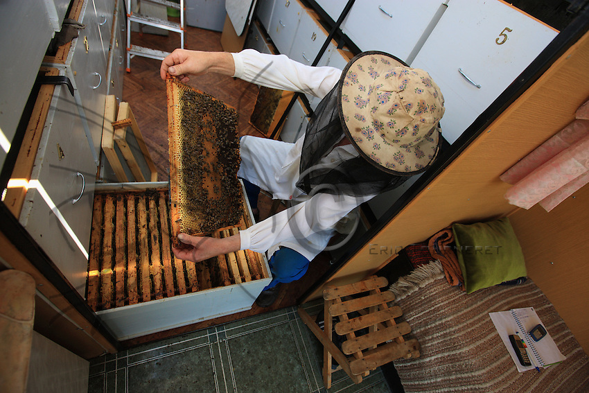In a lodge, a beekeeper has opened a hive and looks at a very nice comb.