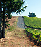 USA, Oregon, Willamette Valley, the road that leads through the vines to Domaine Drouhin Vineyard, Dayton