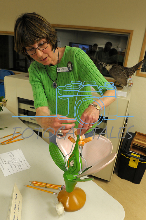 Volunteer Margee McCafferty uses a model to show the parts of a flower during Nevada Wildflower Family Fun Day at the Nevada State Museum in Carson City Saturday April 11, 2015. Visitors to the museum were treated to loads of information, hands-on experiences and crafts.<br />