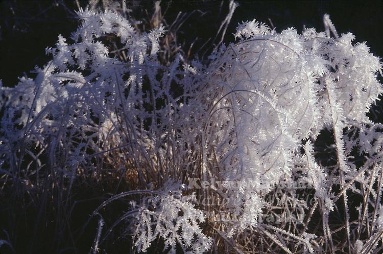 Early morning frozen grass.
