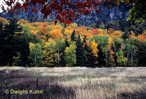 KN07-023d  Forest - autumn, Mt. Kineo, Maine