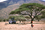 Acacia tree on the Serengeti