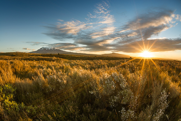 Spectacular sun star over native bush, with Mt Ruapehu. New Zealand  photo, canvas, fine art print
