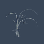 Wild orchids flowers with leaves, refined and tasteful oriental floral design based on Japanese Zen ink painting artwork illustration on faded dark blue background