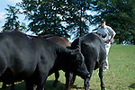 Walter Shealy owns the Black Grove Angus Farm in Newberry, South Carolina. Shealy is a former banking and insurance executive.
