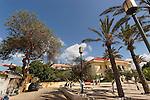 Israel, Tel Aviv. Acacia Albida tree in Neve Tzedek