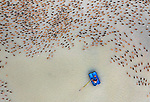 Pictured: A farmer floats on a small blue boat feeding hundreds of ducks.<br /> <br /> The birds can be seen swimming together in a huge group as the worker approaches them.<br /> <br /> The worker waded through shallow water at this duck farm in the Panchagarh District of Bangladesh using a makeshift boat made out of plastic drums.<br /> <br /> Photographer Abdul Momin, 29, was working on a project nearby when he noticed the unusual sight and headed over with his drone.  SEE OUR COPY FOR FULL DETAILS.<br /> <br /> Please byline:   Abdul Momin/Solent News<br /> <br /> © Abdul Momin/Solent News & Photo Agency<br /> UK +44 (0) 2380 458800