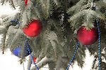 Holiday Ornaments hanging on a evergreen Christmas Tree
