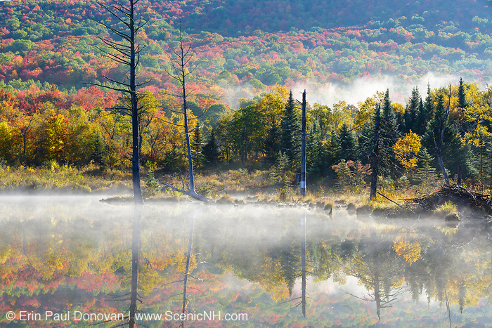 Wildlife Pond in Bethlehem, New Hampshire USA on a foggy autumn morning.