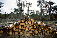 Rain-soaked logs await removal from the mud at a Trillium/Savia tract east of the Argentine town of Tolhuin.