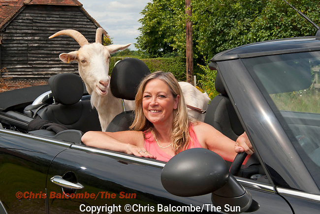 The Sun's Antonella Lazzeri tries her hand at having a goat instead of a dog.<br /> <br /> Pic: Chris Balcombe<br /> <br /> 07568 098176