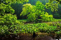 Spring wetlands, Pee Dee National Wildlife Refuge