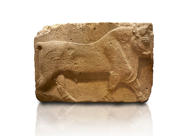 Phrygian relief sculpted orthostat stone panel, 1200-700 B.C. Anatolian Civilisations Museum, Ankara, Turkey. Figure of a walking bull. <br /> <br /> Against a white background.