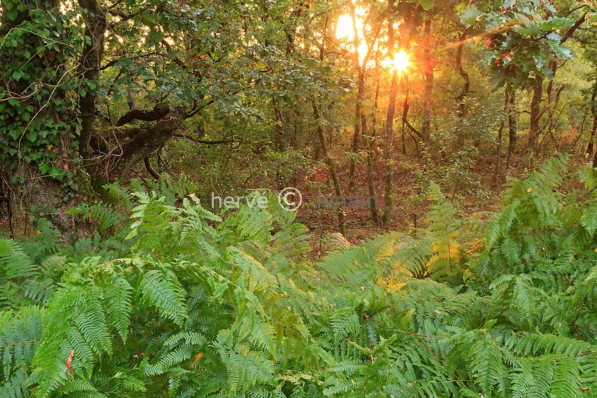France, Indre (36), parc naturel régional de la Brenne, Rosnay,sous-bois et fougères le soir vers l'étang du Blizon // France, Indre, Natural Parc of the Brenne, Rosnay, undergrowth with ferns in the evening around the pond of Blizon