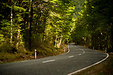 NEW ZEALAND, Fiordland National Park, The Road to Milford Sound, Ben M Thomas