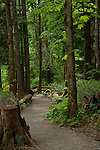 Tree lined trail Campbell river,Vancouver Island, British Columbia, Canada.