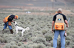 Competitors Dan Hannah and Paul Predere compete in the U.S. Bird Dogs Western State Nationals in Mound House, Nev., on Friday, April 24, 2015. <br /> Photo by Cathleen Allison