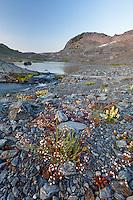 Wildflowers and alpine lake in upper Ferry Basin, Bailey Range, Olympic National Park, Washington