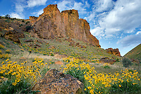 Balsamroot wildflowers and rock formations in Leslie Gulch. Malhuer County, Oregon