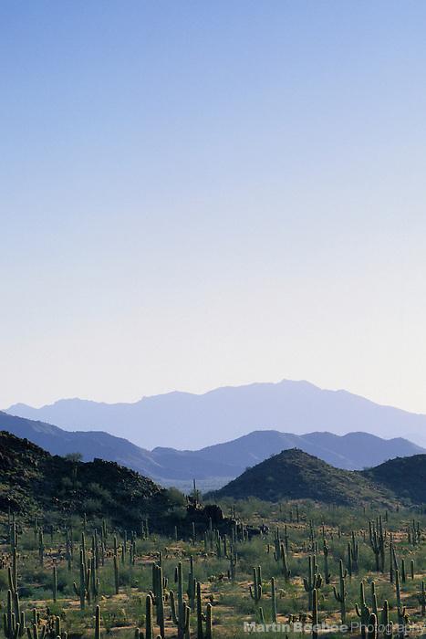 Desert mountains and saguaro forest, Sonoran Desert National Monument, Arizona