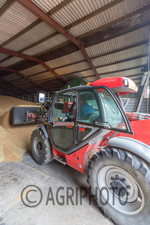 Tele Handler  loading wheat out of a store<br /> Picture Tim Scrivener 07850 303986