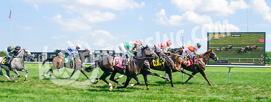 Speak With Me winning at Delaware Park on 7/6/16
