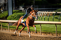 LOUISVILLE, KY - MAY 01: Hence completes his final workout for the Kentucky Derby at Churchill Downs on May 01, 2017 in Louisville, Kentucky. (Photo by Alex Evers/Eclipse Sportswire/Getty Images)