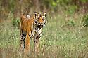India & Asia: Mammals