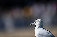OLDSMAR, FLORIDA - FEBRUARY 11: Even the birds were enjoying the races, during the Sam F. Davis Stakes at Tampa Bay Downs on February 11, 2017 in Oldsmar, Florida (photo by Douglas DeFelice/Eclipse Sportswire/Getty Images)