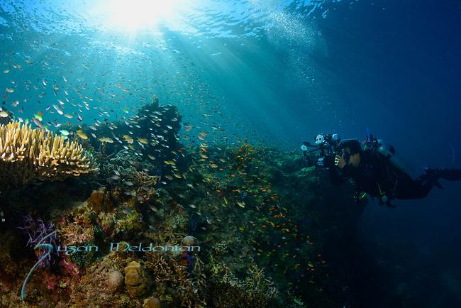 Maumere, Indonesia, Babi, Flores Sea, Maumere Festival, Suzan Meldonian