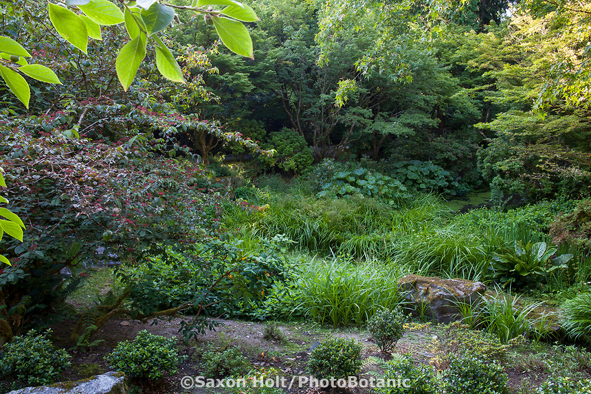 Lush planting in Shorts Ground Cover Garden at Bellevue Botanical Garden
