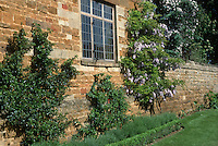Pyracantha, Wisteria, Buxus, Lavandula in spring against stone house and wall, with old window, lawn grass