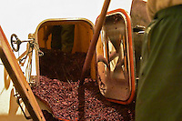 In the winery a man raking out what remains after emptying the wine after fermentation, grape skins, pips, called marc. A man is also inside the tank to shovel out the marc. Chateau Mourgues du Gres Grès, Costieres de Nimes, Bouches du Rhone, Provence, France, Europe